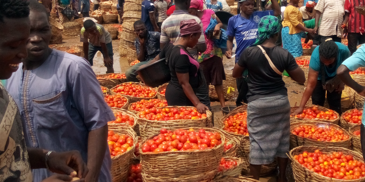 When you come to Mile 12 Lagos, the first thing that comes to your mind is the huge fruits and vegetables market. Daily about 500 to 1000 trucks loaded with fresh fruits, vegetables and other perishable food are off-loaded inside the market. On arrival the produce are normally sold off to the wholesalers who in turn sells to the retailers.  Farmers, retailers and wholesalers experience high rate of spoilage, during transportation and offloading. Raffia basket which is used in packaging damages most of the fresh fruits and vegetables especially the tomatoes, due to inherent stress during transportation. While offloading some of the tomatoes falls into the mud, trampled on and before it gets to the owner 10% loss have occurred.  After the day sales, the traders keep their tomatoes in the open space, covering it with leaf, but this does not stop spoilage from happening. From the farm s in the northern part of Nigeria down to the Mile 12 Market in Lagos great loss happens even before it get to the final consumer.  ColdHubs will be working with the Fresh Fruits and Vegetables Dealers Association, to reduce these loses.