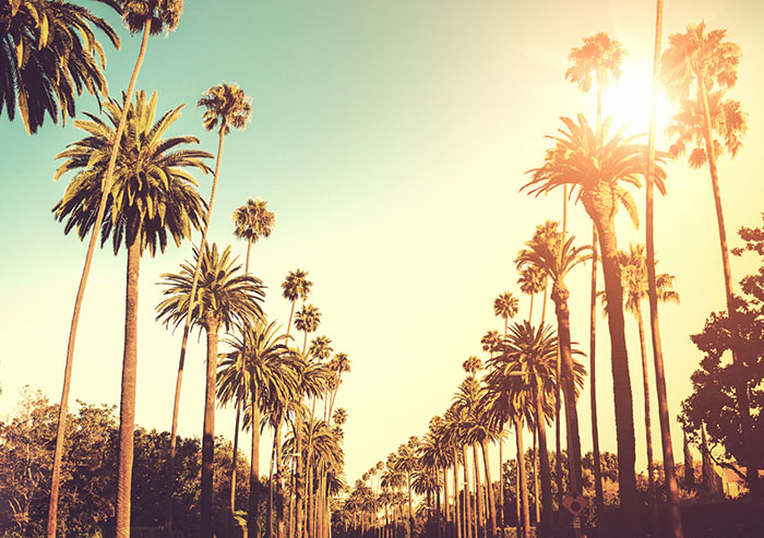 PALM-LINED STREETS OF LOS ANGELES, CALIFORNIA.