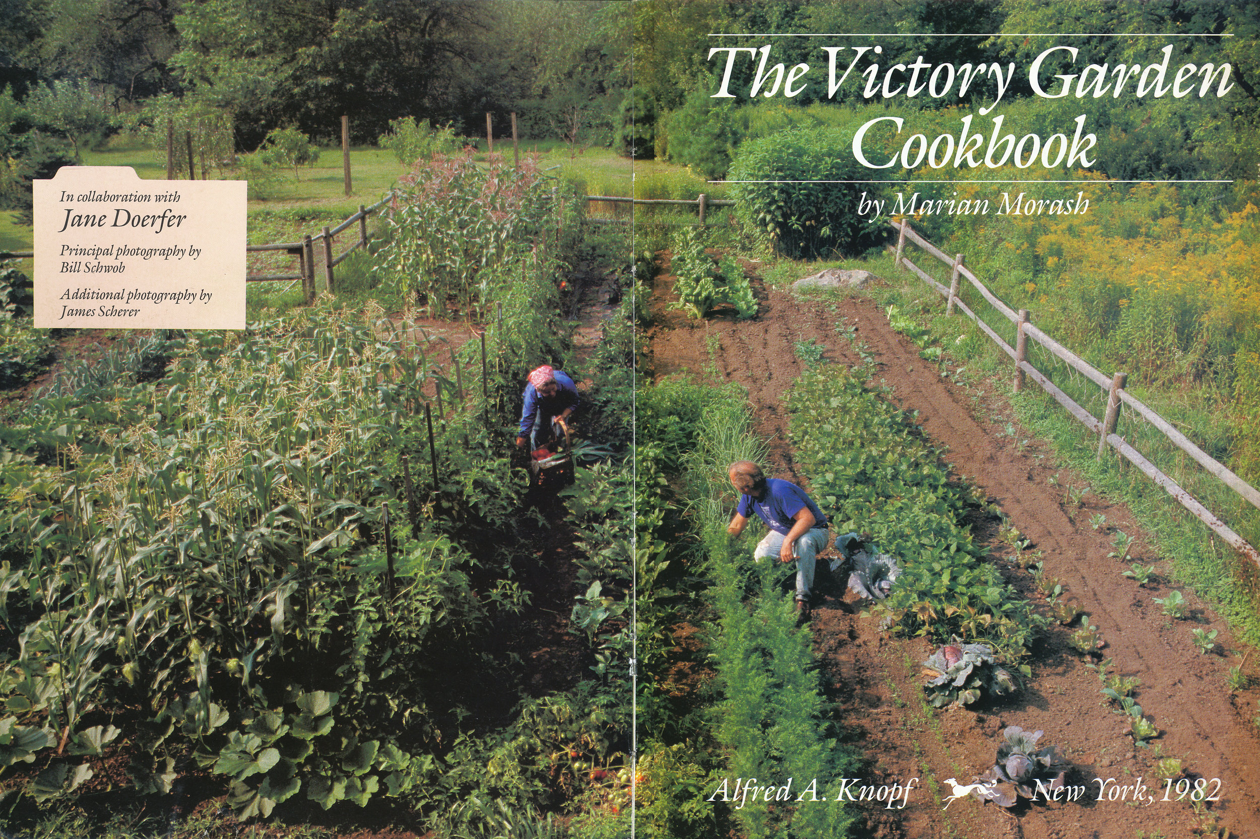 The victory garden at their home outside Boston. From 'The Victory Garden Cookbook', 1982.