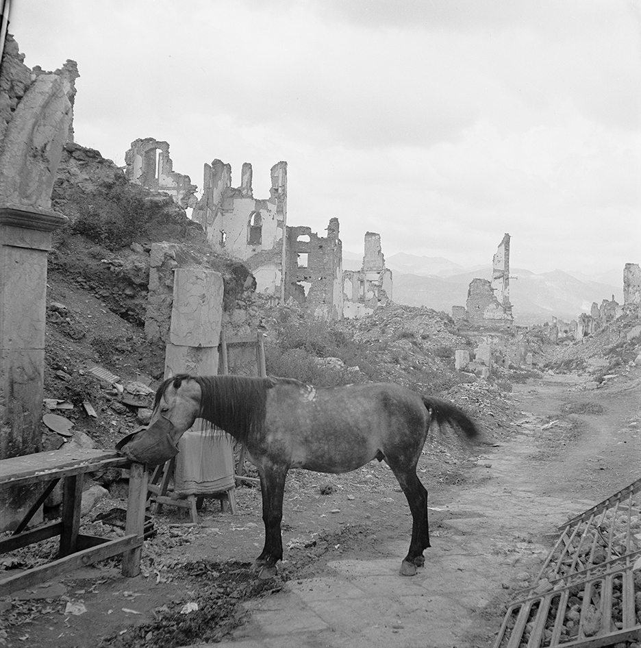 A lone horse is fed oats near the entrance to the cathedral, Cassino, Italy, May, 1947