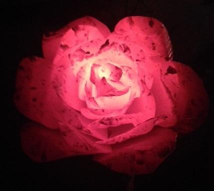 Steel Rose_TallPineForge Nov 2014.jpg