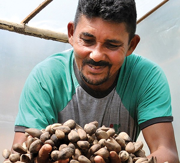 羅德里格斯正在捧著一把Murumuru樹的種子。 Photo credit :Natura 官網