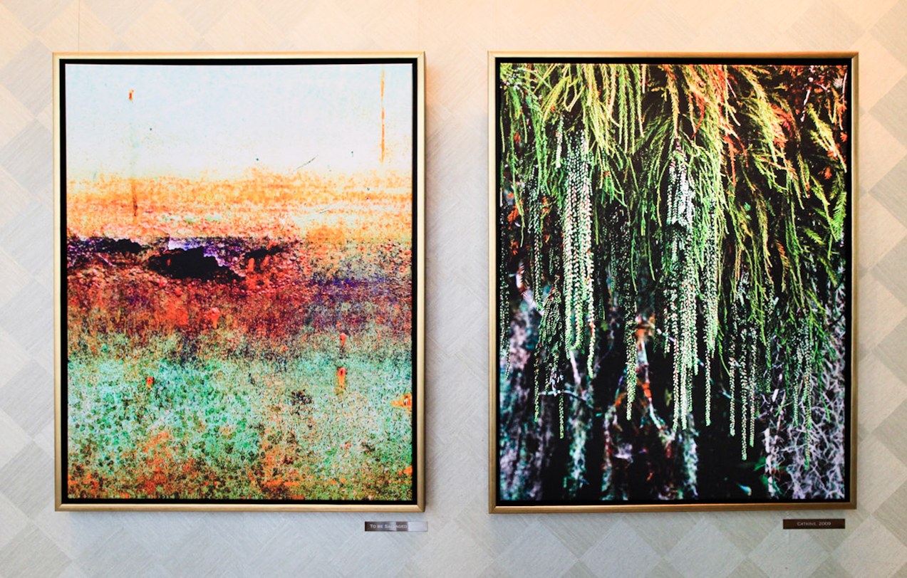 Fragile Beauty,  solo show at the Umstead, Cary, NC., 2011.  To Be Salvaged , at left with  Catkins , at right
