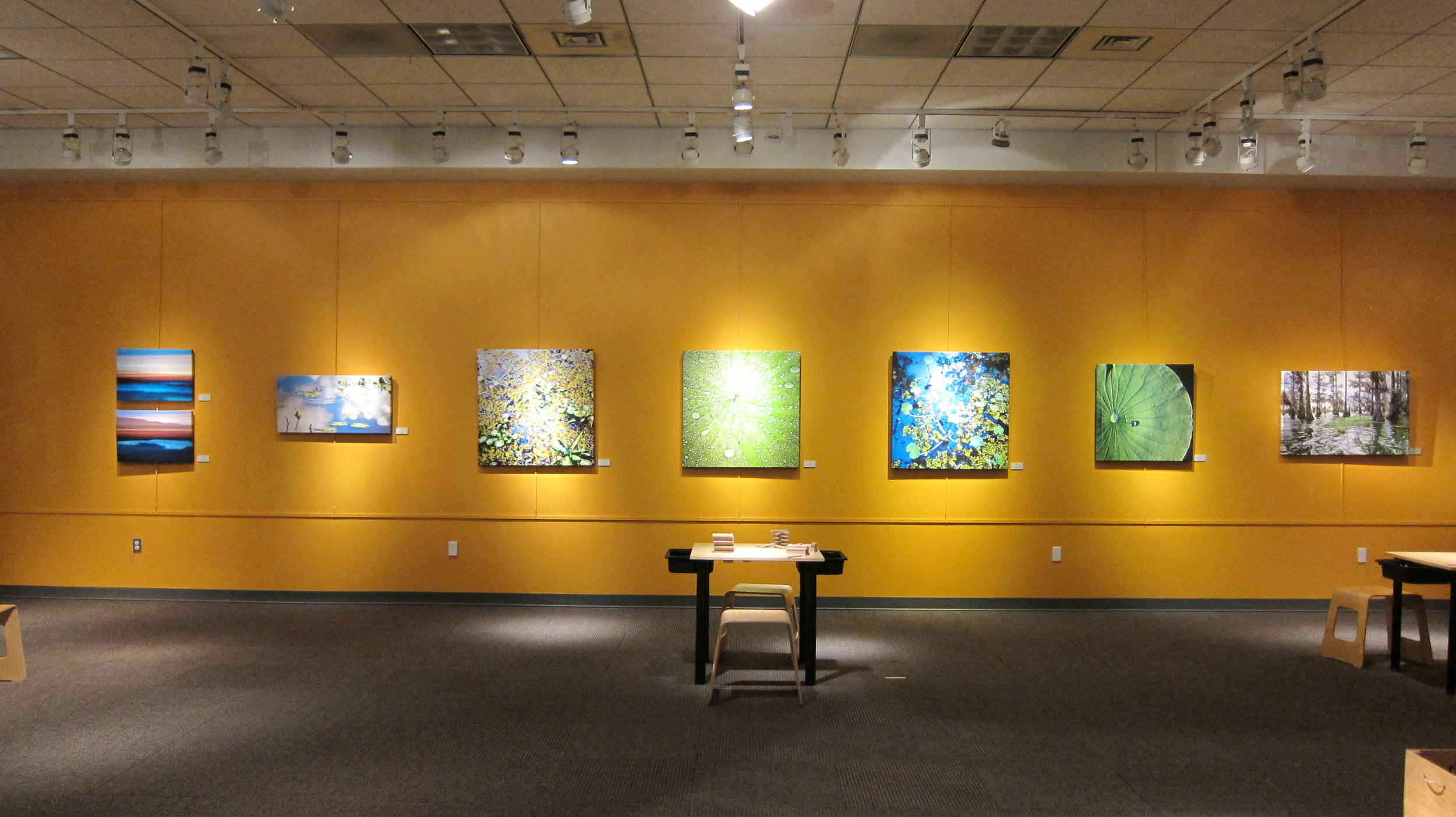 Fragile Beauty , solo show at the Museum of Life and Science, Durham, NC 2012