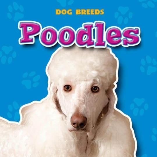 poodles.jpg