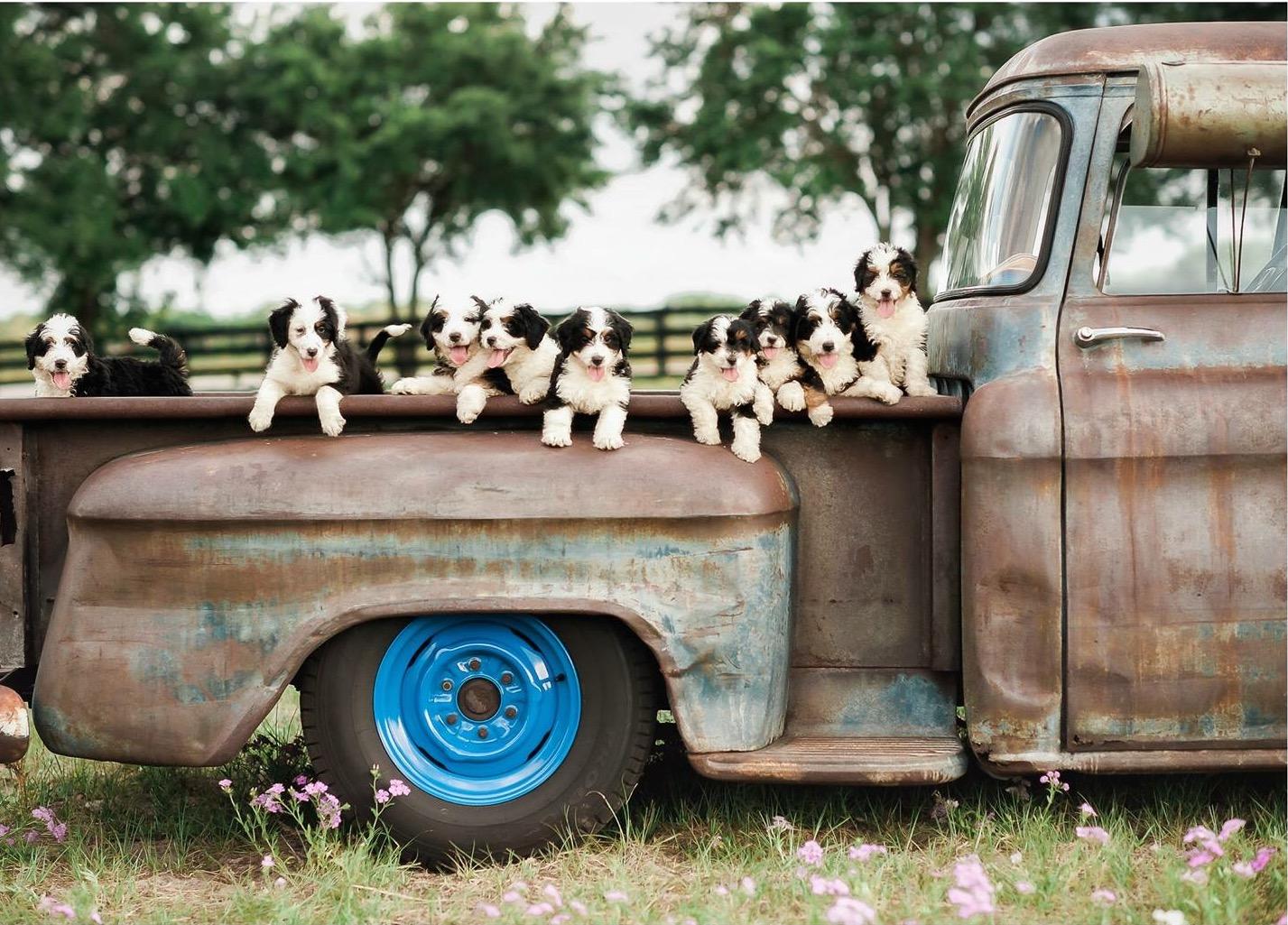 Puppy Truck.jpeg