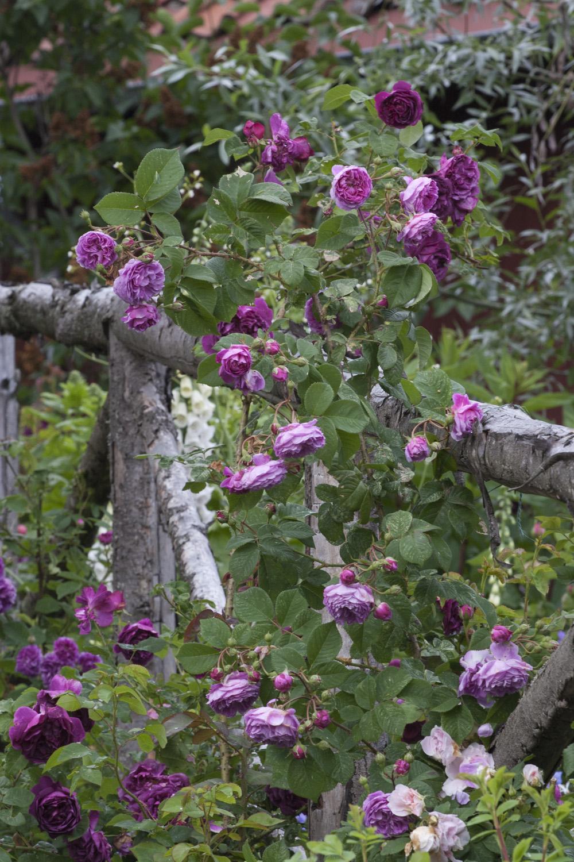 cottagegarden-planter