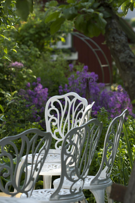 Som vanlig dominerer lillafargene i hagen.