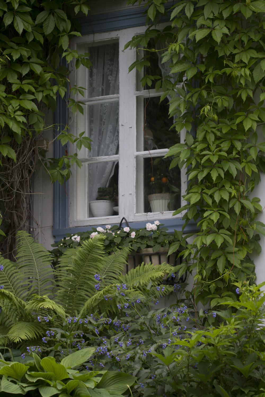I Skyggebedet pryder fortsatt den forhatte Valurten med sine klare, blå blomster.