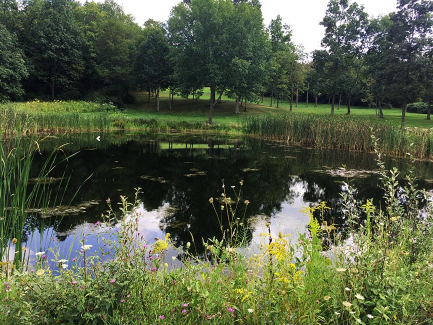 Pond 4 PS.jpg