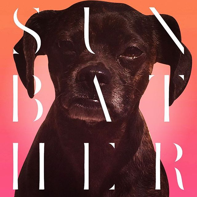 All I think when I see my doggo Sunbathing... #doggolife #sunbather #deafheaven #cuedreamhouse