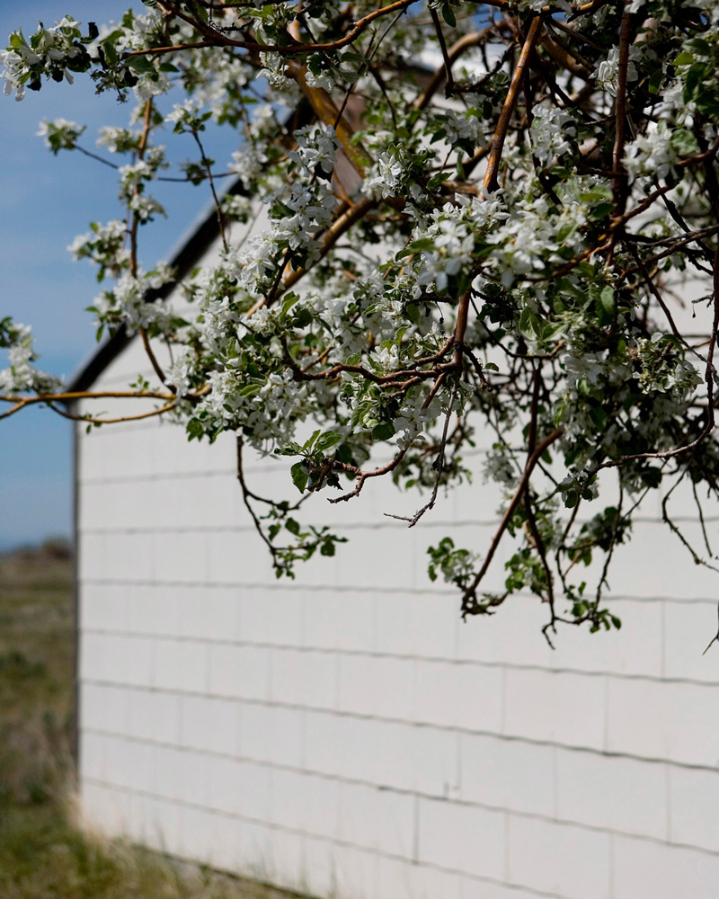 """Title: 5042A-19617 (flowered tree), Archival pigment print, 20x16"""", 2008"""