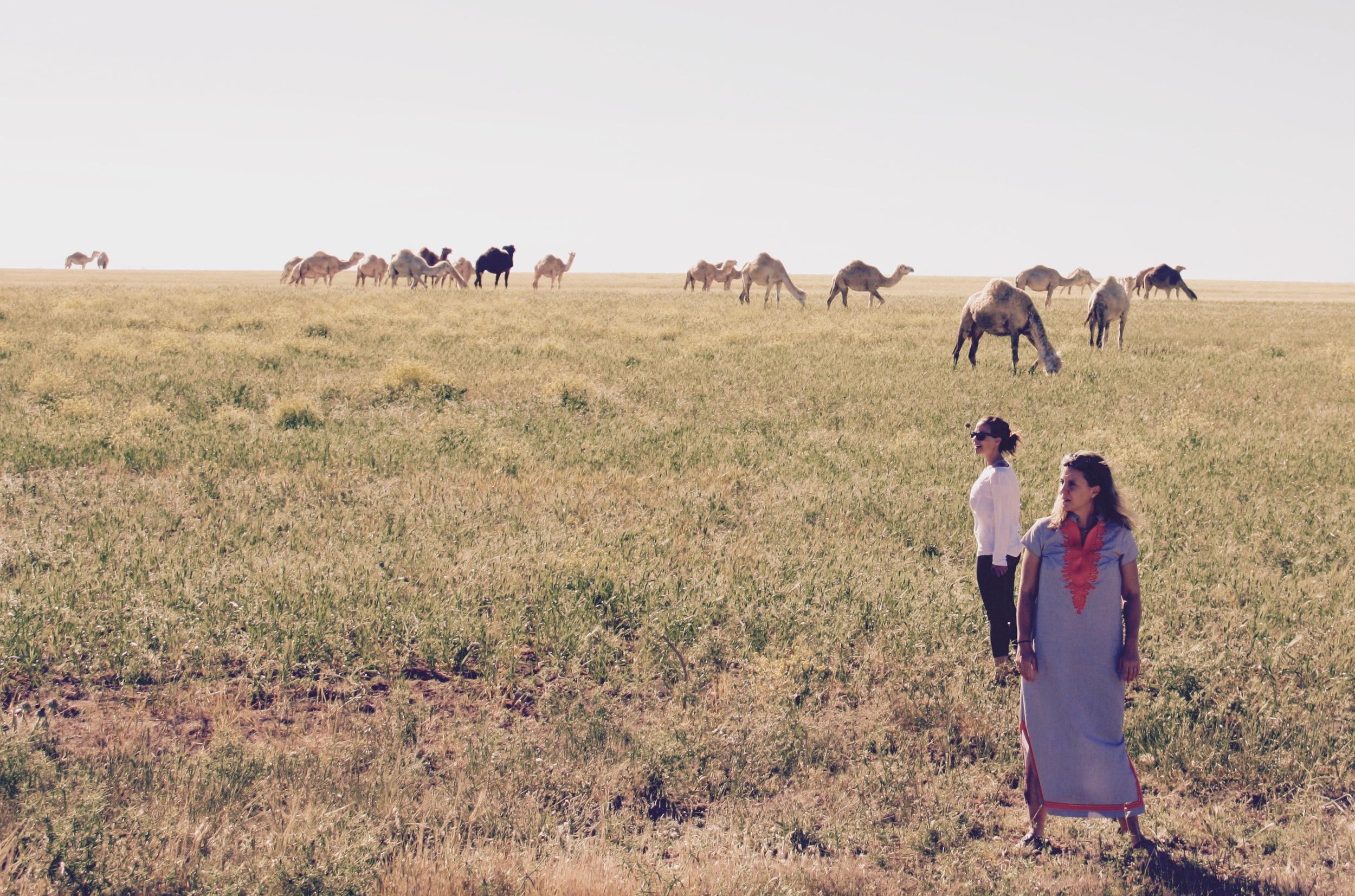 Wild Camels in the Jordanian Highlands - 3 Days*