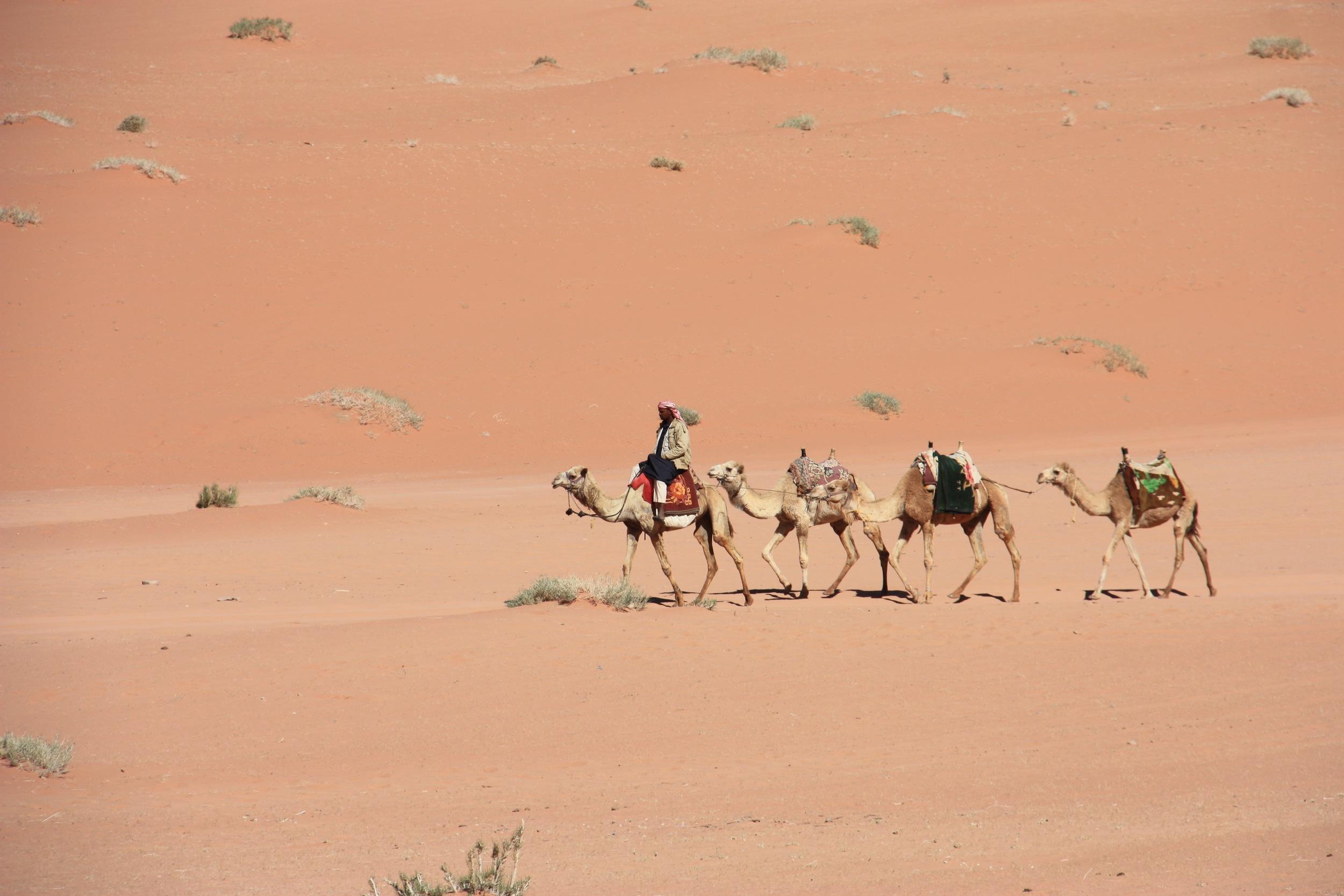 Camels in the Wadi Rum desert, Jordan - 3 Days*