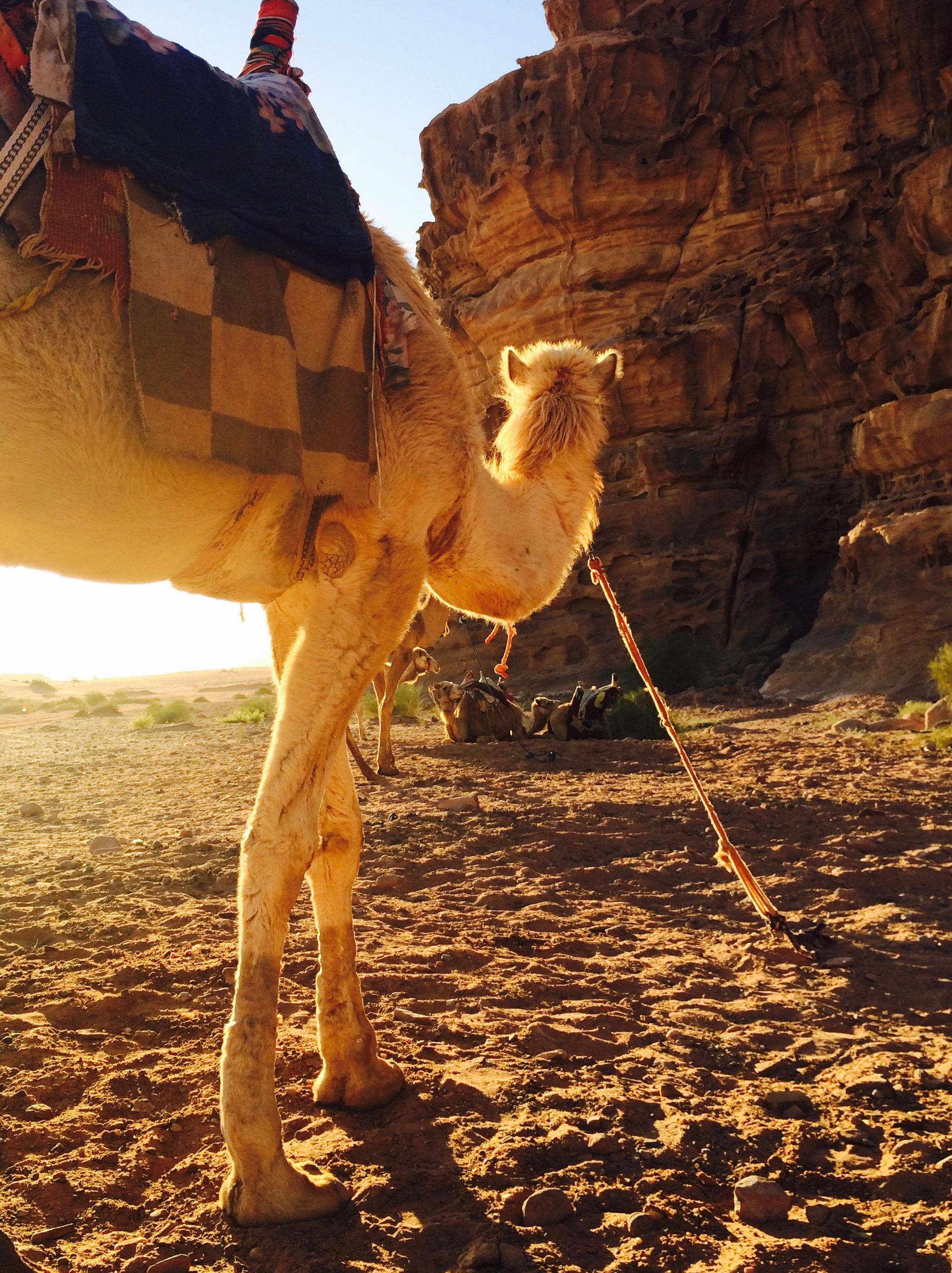 Camel ride at sunrise, Wadi Rum Jordan - 3 Days*