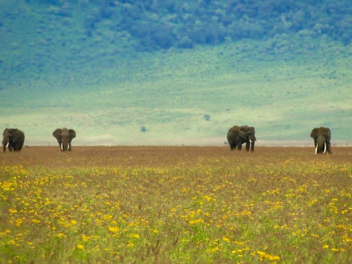 Elephants on Safari, Tanzania Africa - 3 Days*