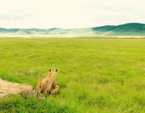 Lion and Cub on Safari, Tanzania Africa - 3 Days*