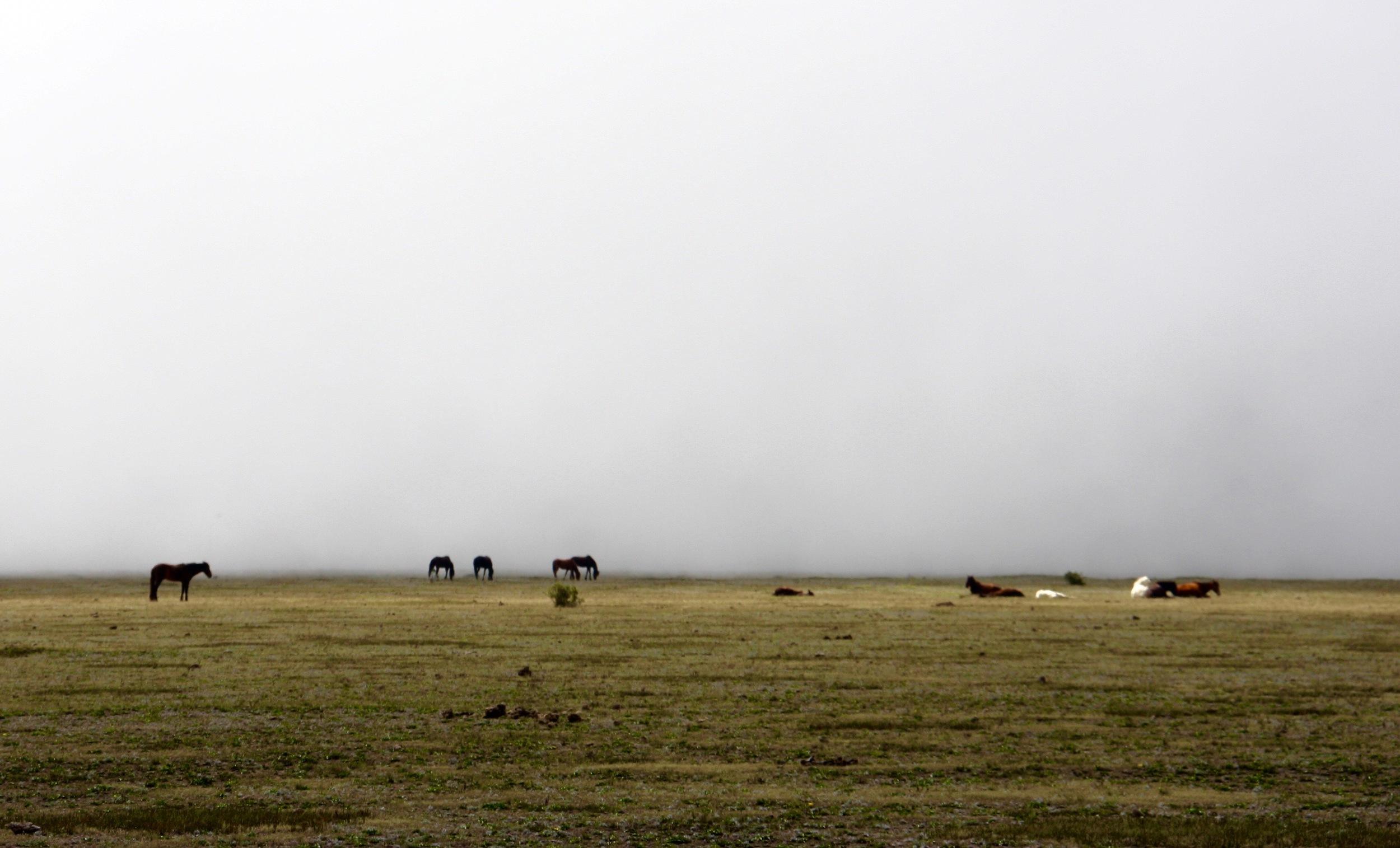 Wild Horses at Volcano Cotopaxi, Ecuador - 3 Days*