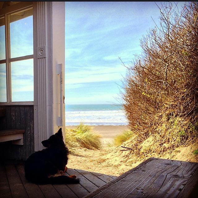 Siren Canteen, Stinton Beach California - 3 Days*