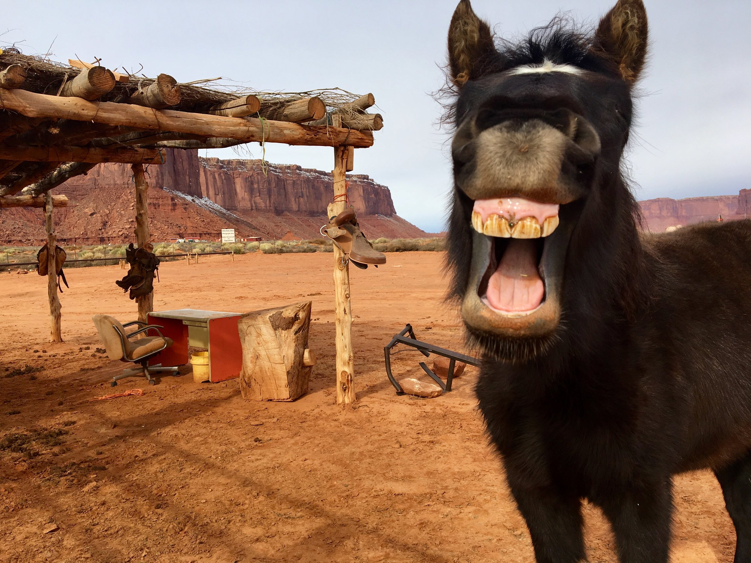 Happy Horse in Monument Valley, Utah - 3 Days*