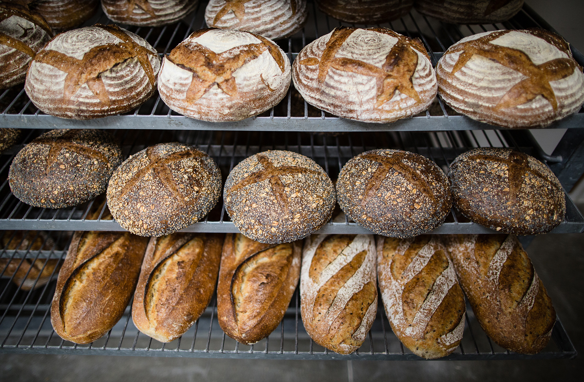 Plant building dietary bread and bakery products