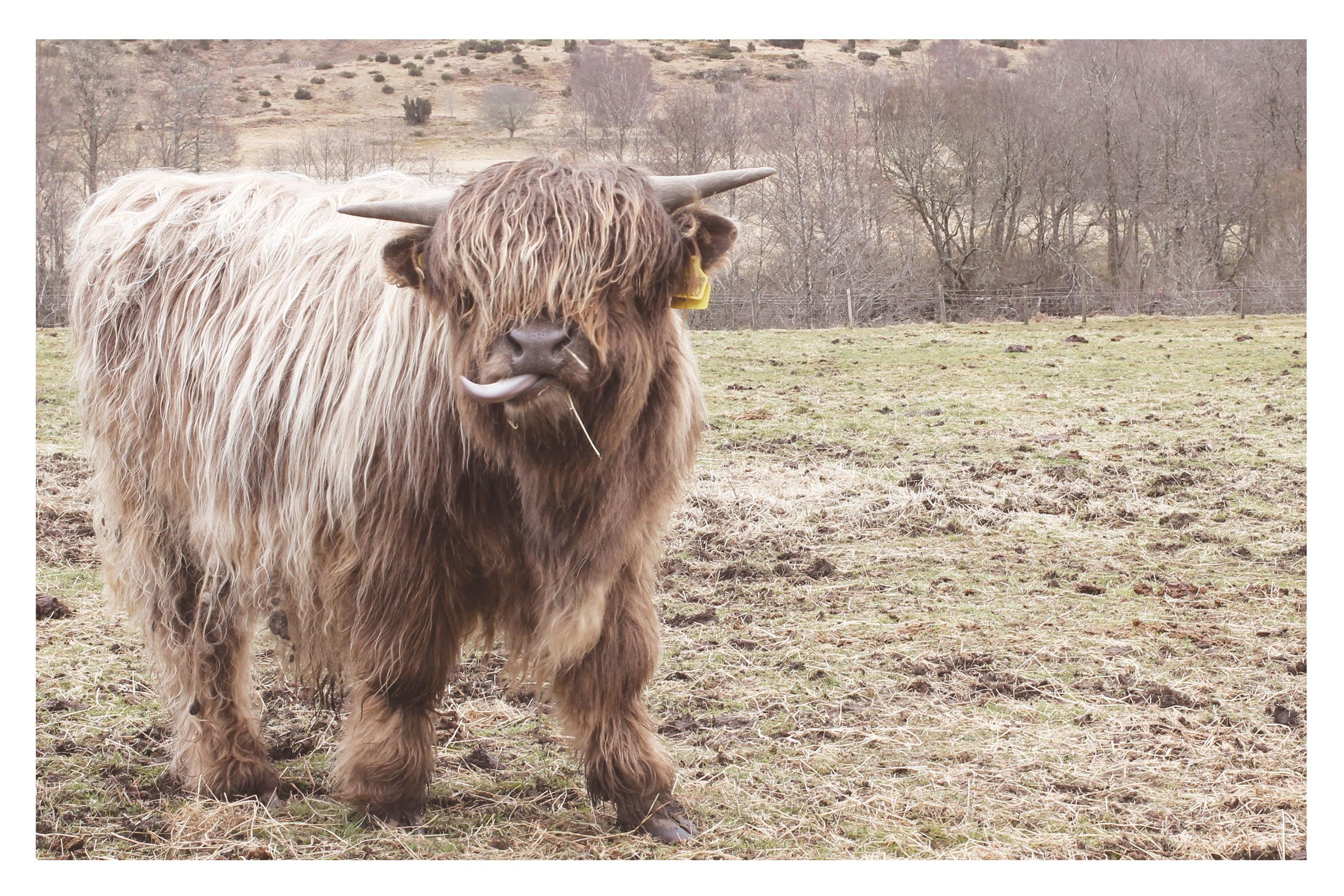 scotland-25.jpg