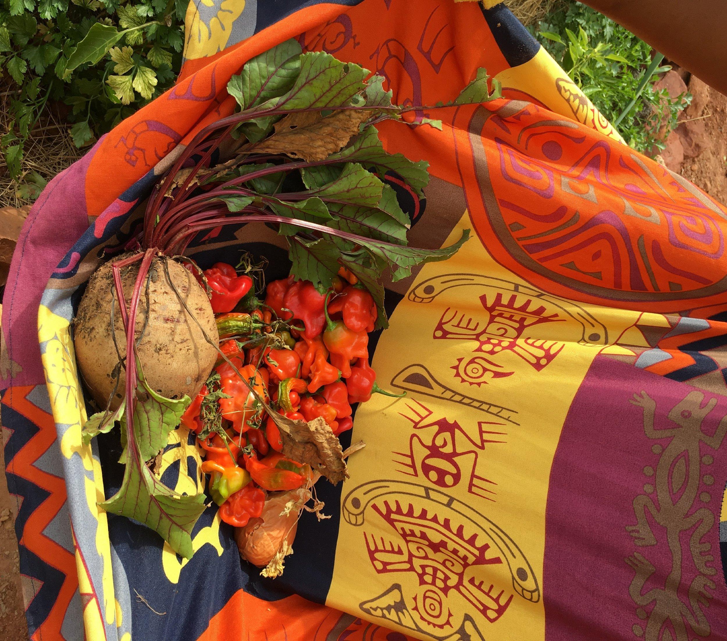 new harvest 2.jpg