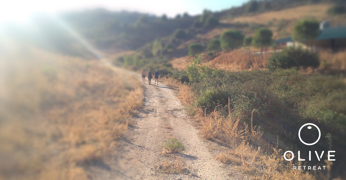 olive-retreat-spain-andalucia-exercise-healthy.jpg