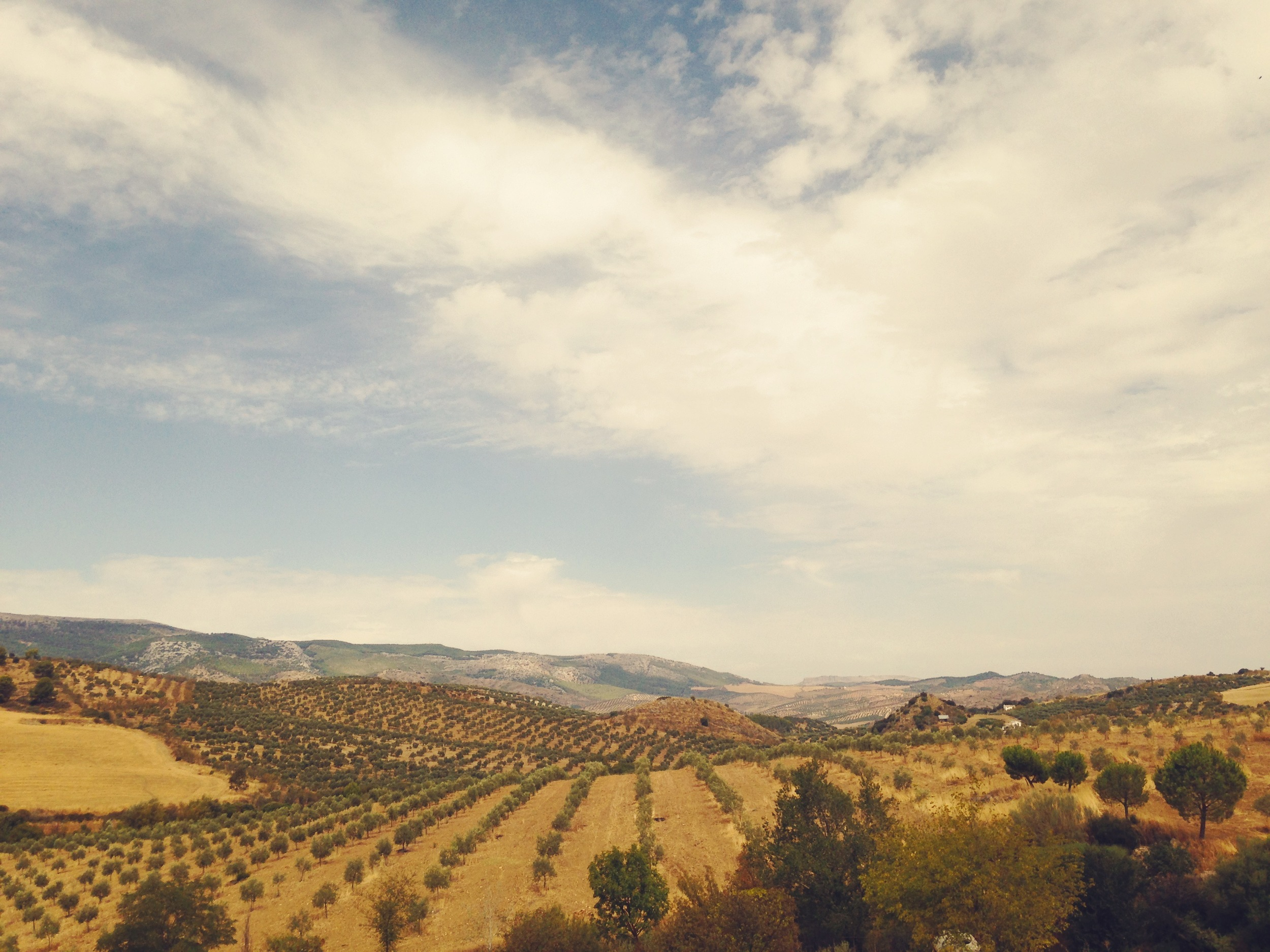 spain retreat olive retreat cleanse relax