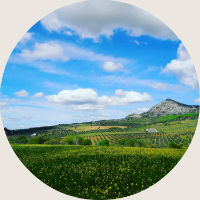 olive-reteat-spain-home-round.jpg