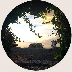 spain-evening-olive-retreat.jpg
