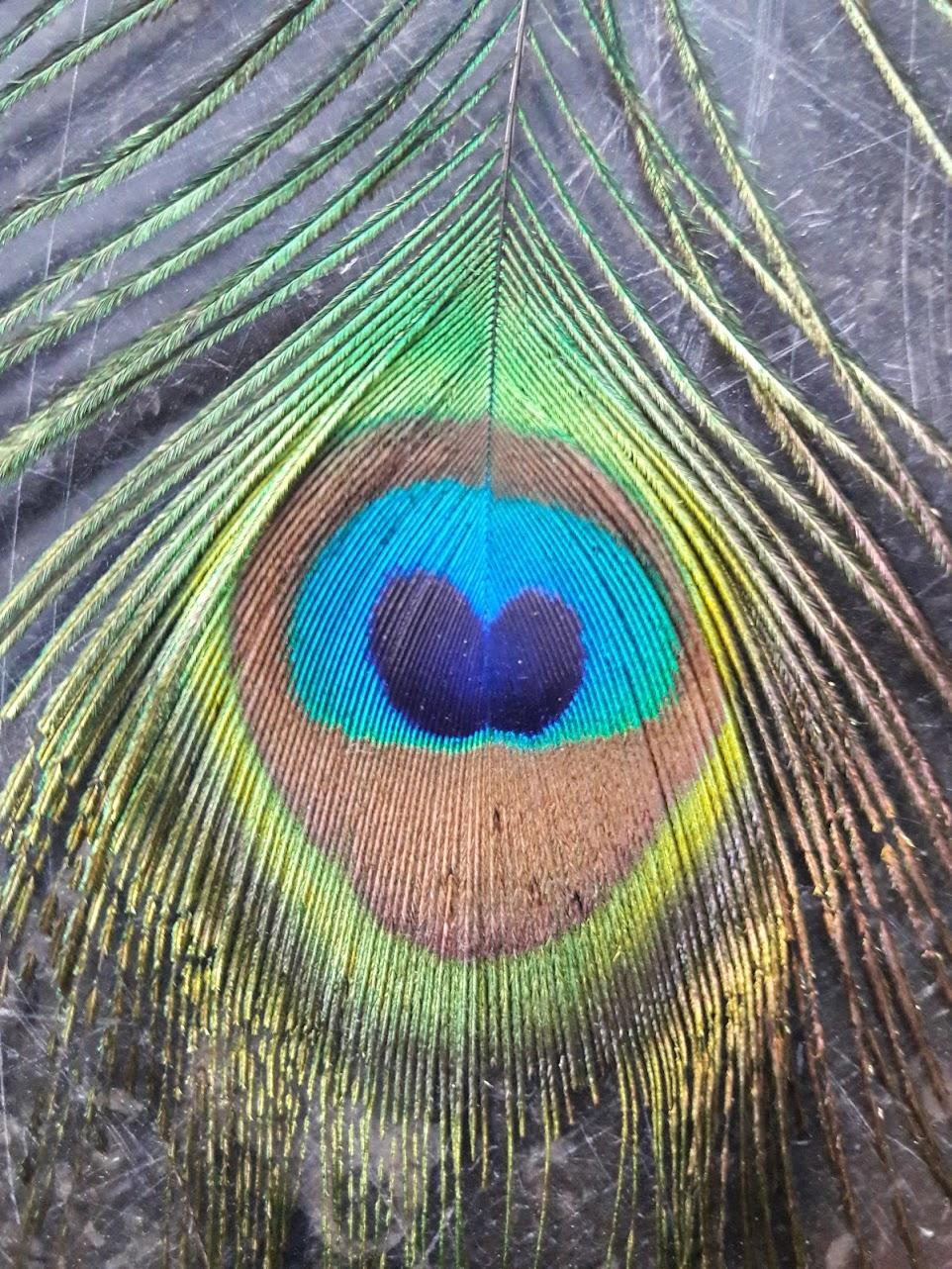 peacockfeatheroliveretreat.jpg