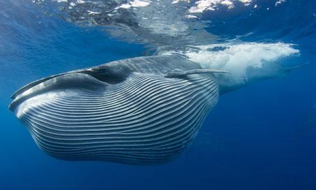 A-Brydes-whale-007.jpg
