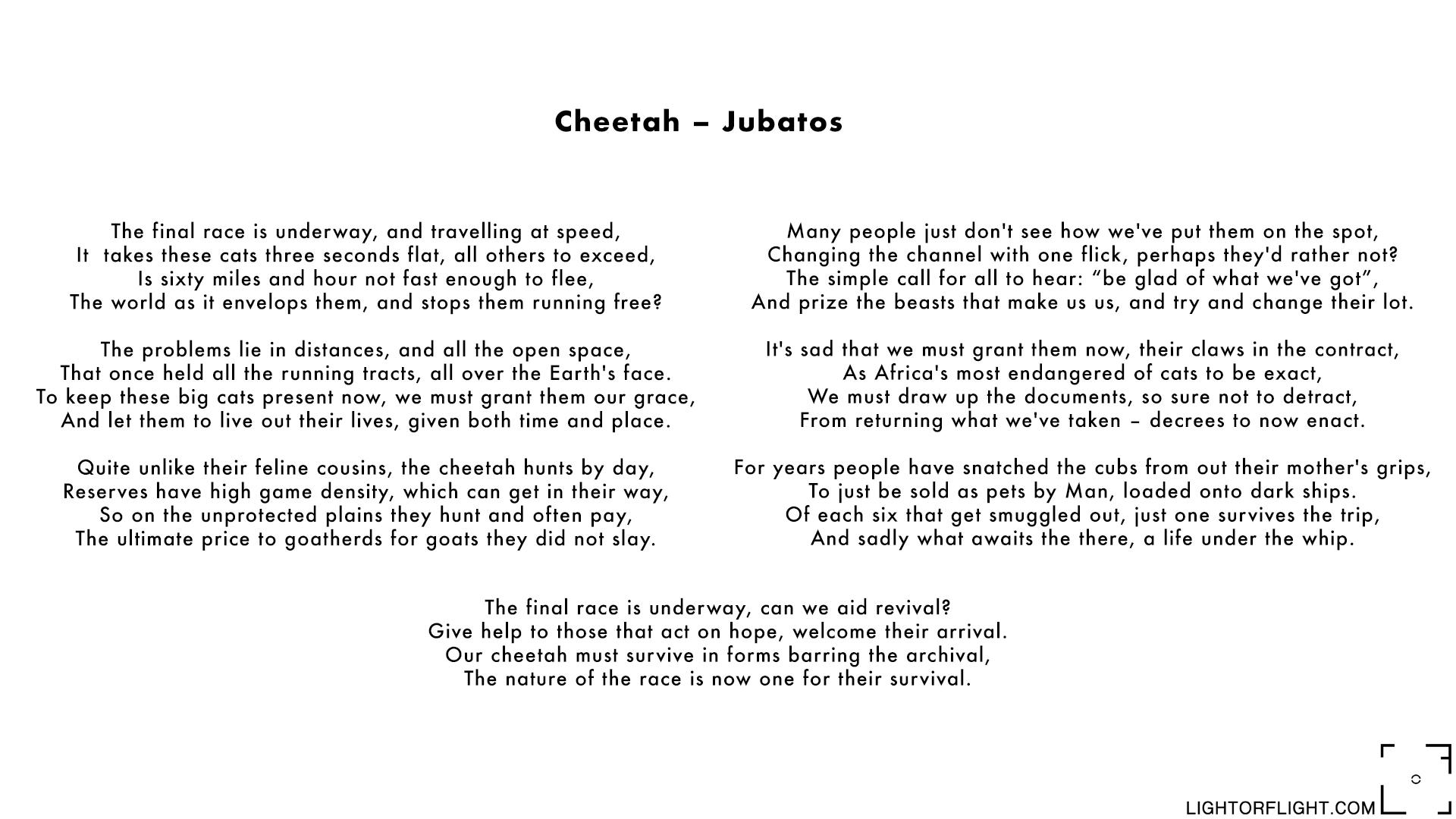 Cheetah - Jubatos.jpg