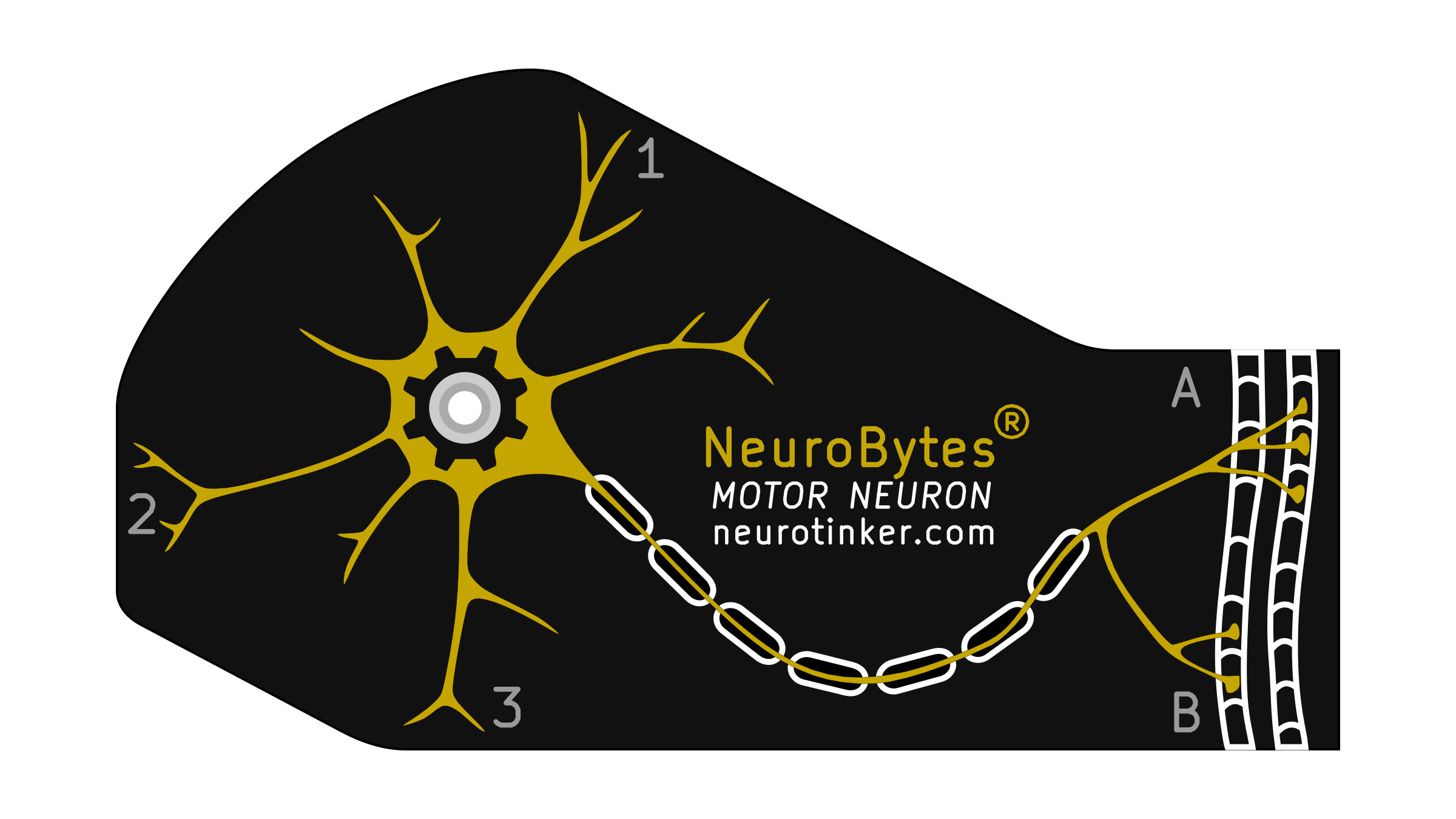 NeuroBytes_Motor_Neuron.png