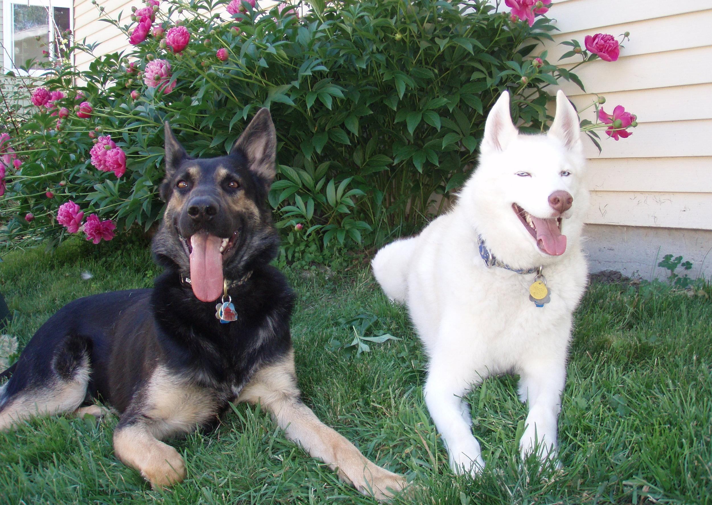 Logan and Joey - June 2006