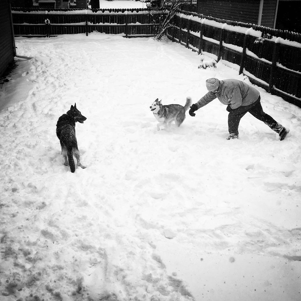Logan, Rollo and Papa - Winter 2017