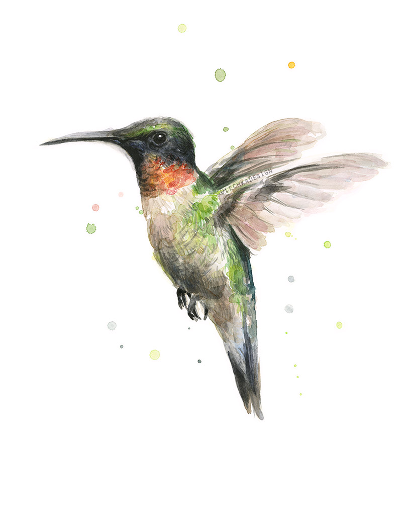 Hummingbird-watercolor-art.jpg
