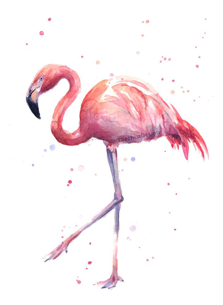 flamingo illustration watercolor
