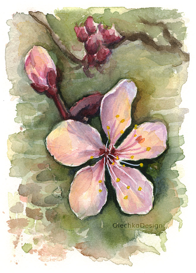 cherry-blossom-watercolor-flower-olechkadesign.jpg