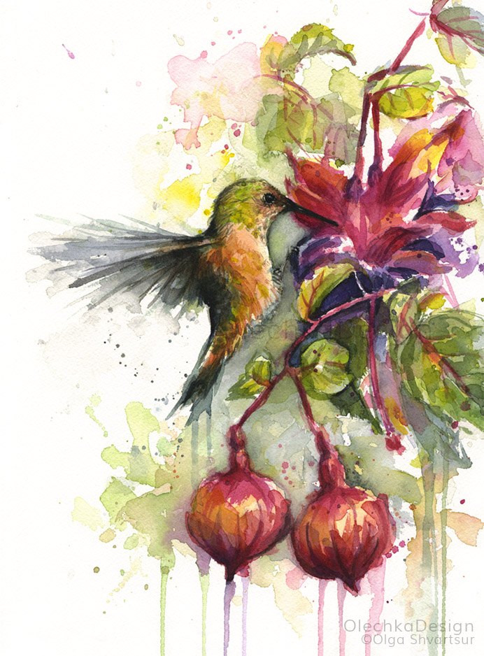 Hummingbird-and-Fuchsia-flower-watercolor-olechkadesign.jpg