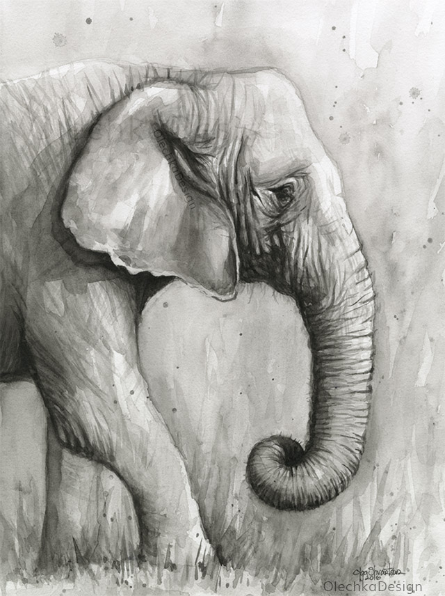 Elephant-watercolor-black-and-white-olechkadesign.jpg