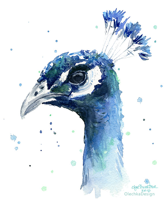 peacock watercolor