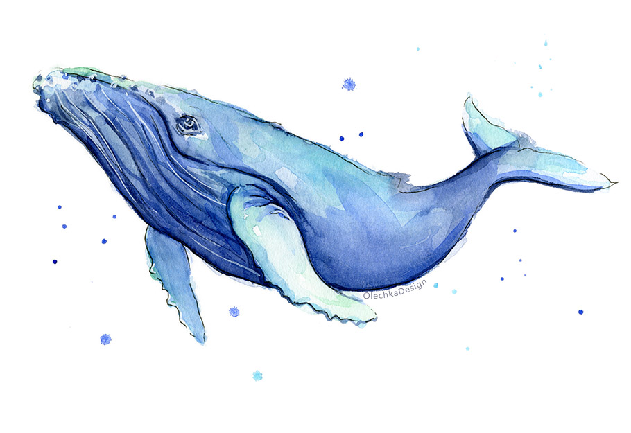humpback watercolor whale