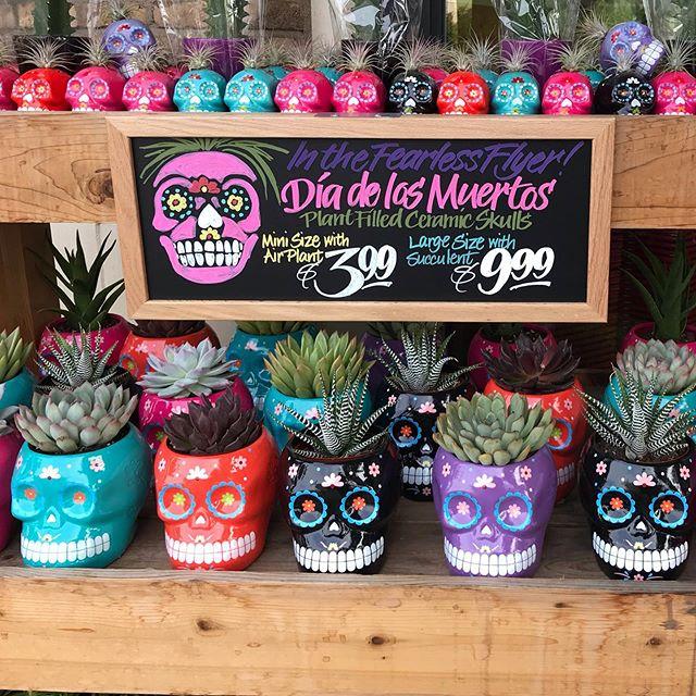 So cool! 💀 @traderjoes #skull #sugarskull #diadelosmuertos #succulents