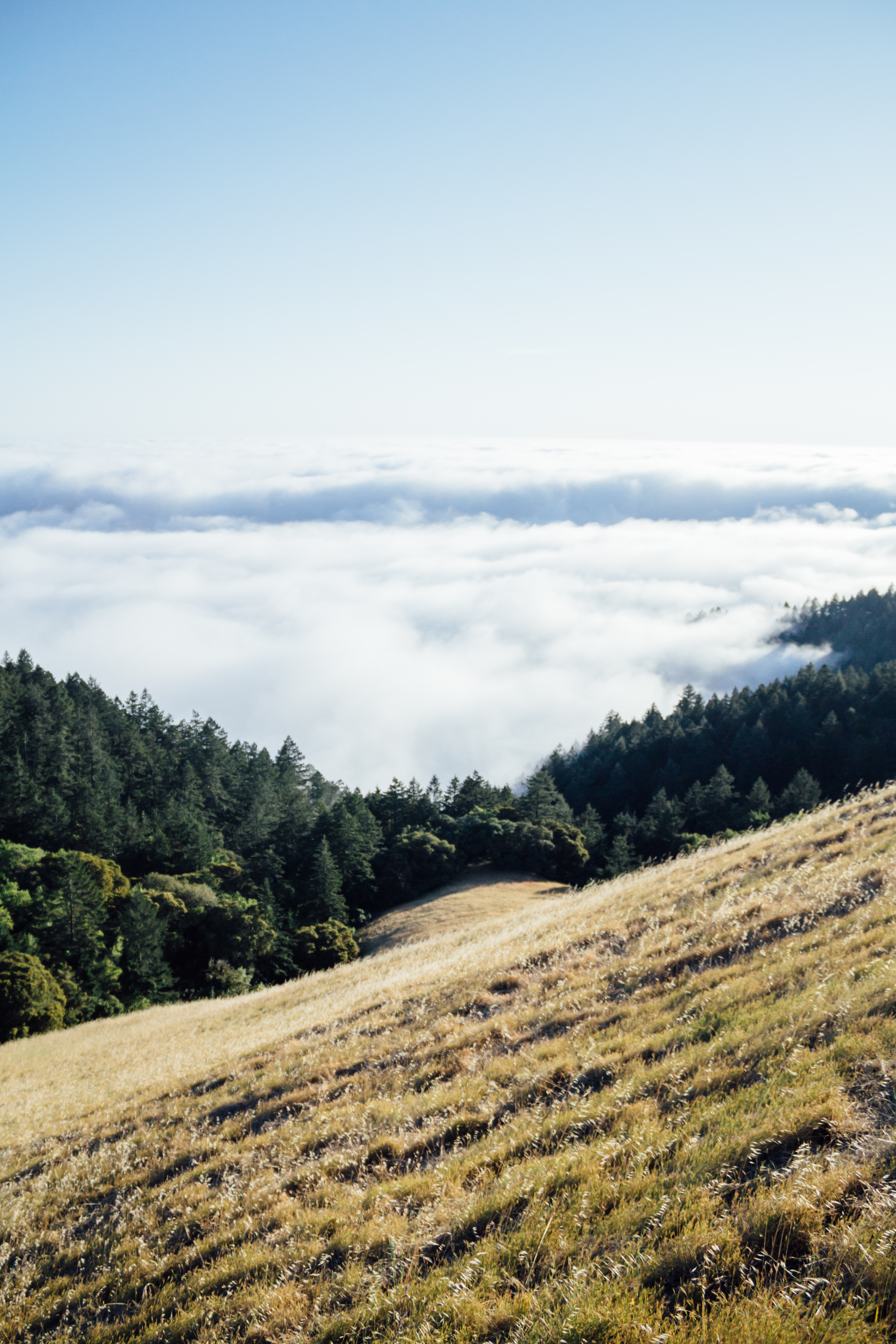 Hill in Mount Tam by Catherine Alyce