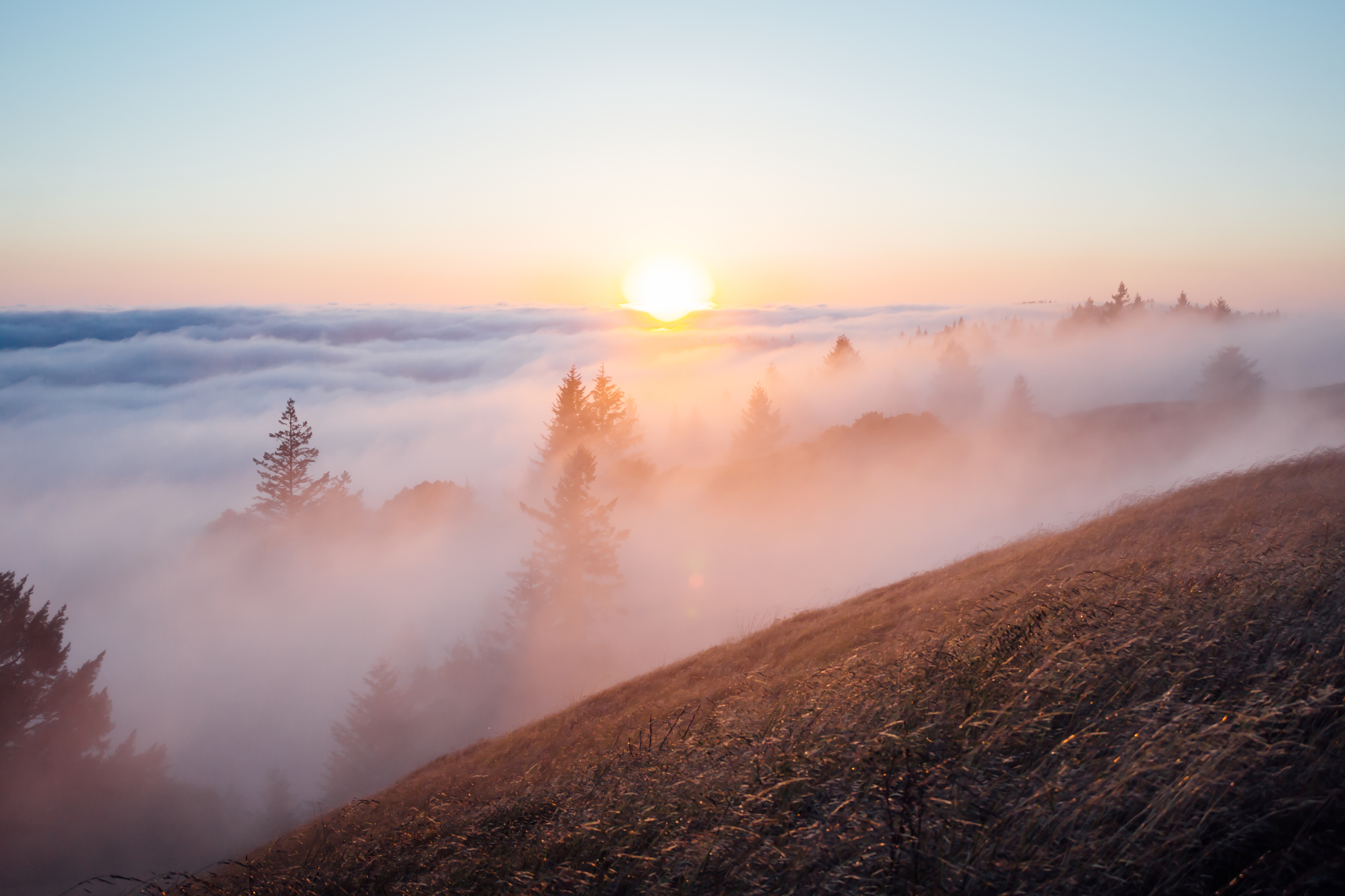 Mount Tam by Catherine Alyce