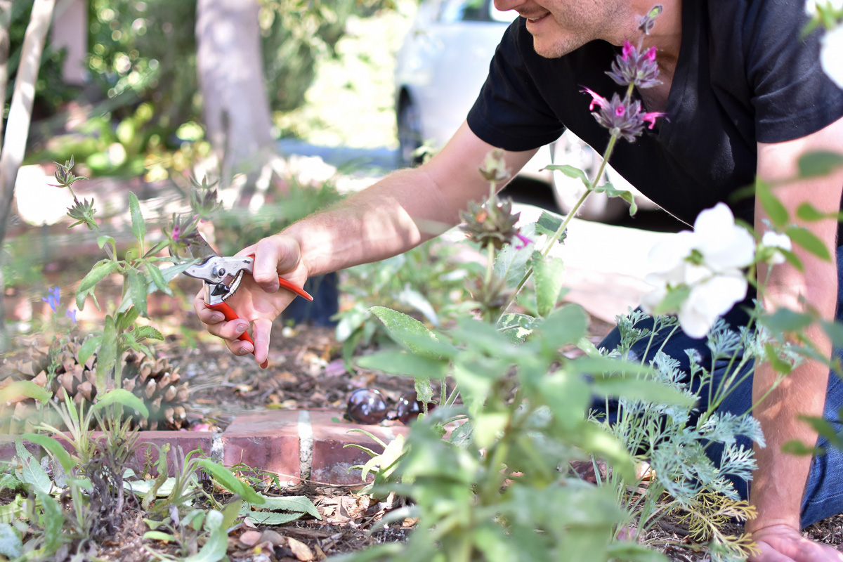 Pruning should always be done by hand, it's better for the plants! Mechanized tools are aggressive and polluting.