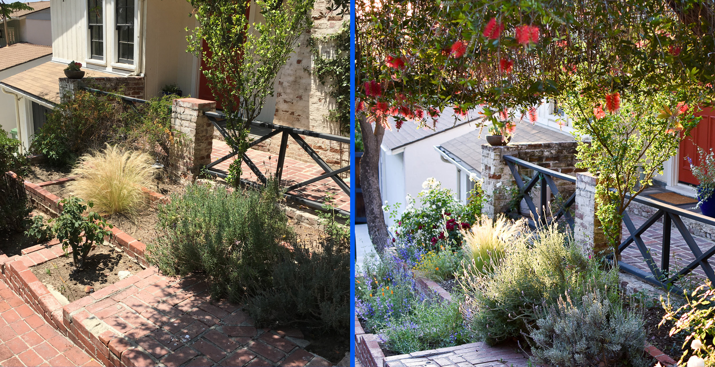 BEFORE & AFTER:  Our client Charlie's Silver Lake garden had all the common problems: degraded, dried-up soil, poorly-pruned shrubs, aggressive invasives. After a little Saturate TLC, it's now a vibrant, healthy space that makes you feel alive!