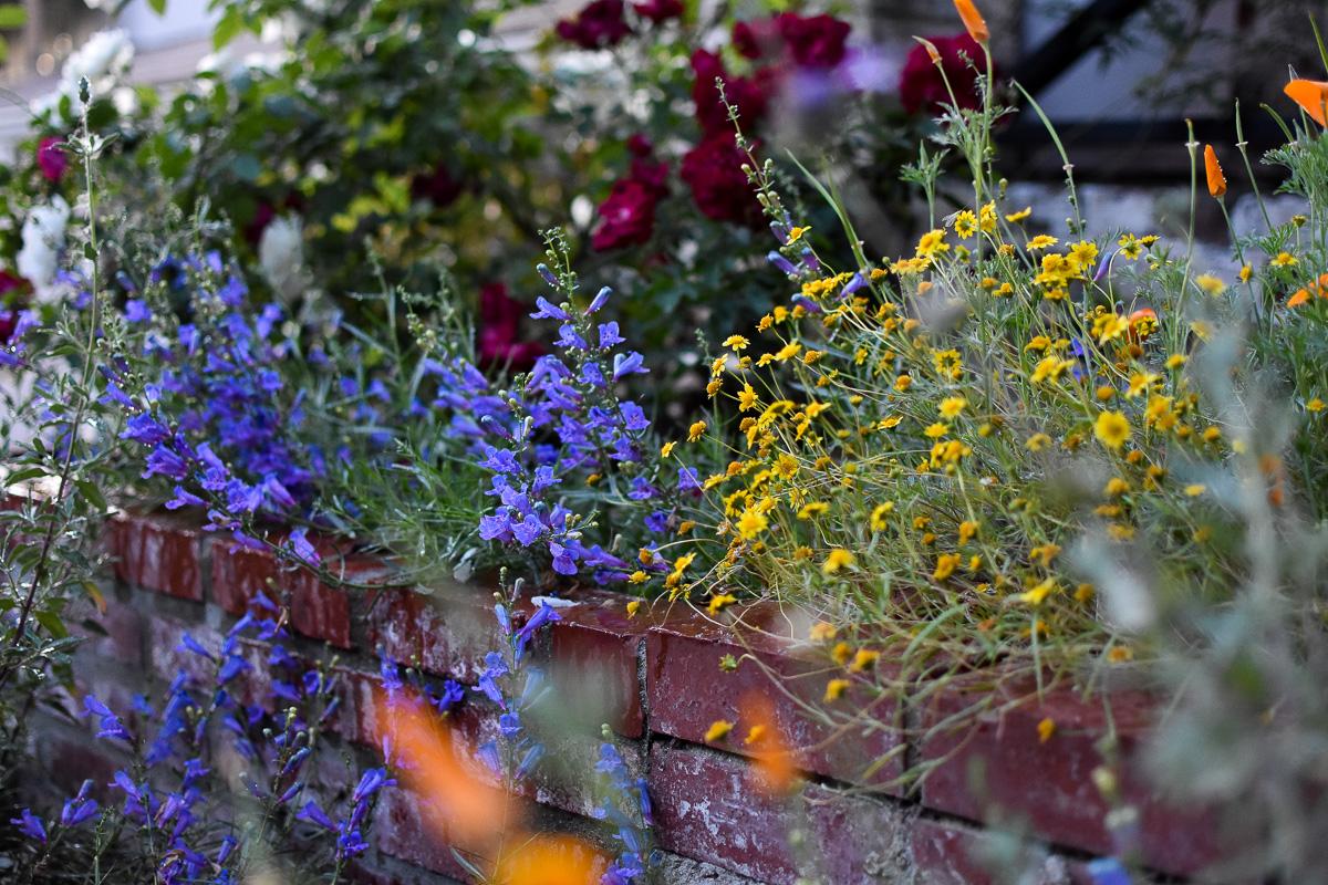 Charlie's Garden-120.jpg